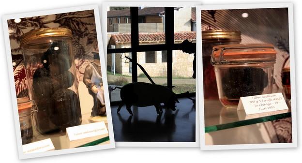 La truffe noire du Périgord : tout savoir (ou presque) sur l'or noir de la gastronomie 4
