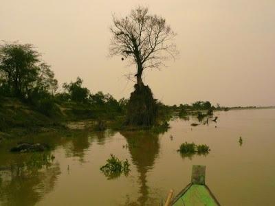 Parc national de Dibaru Saikhowa: week end nature en Inde 5