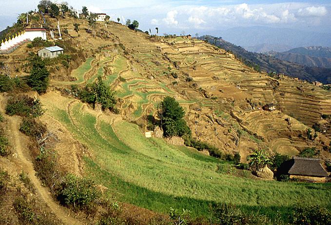nomobuddha terrasses nepal