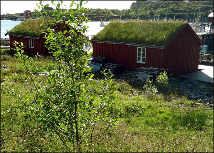 maisons toit herbe Lofoten