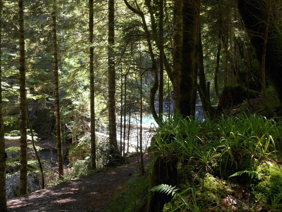 Montée tranquille en forêt...