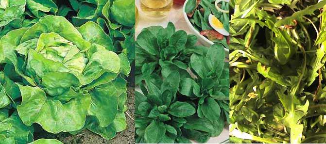 salade cuisine bourguignonne