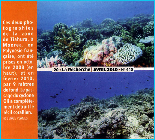 coraux-apres-cyclone-oli.1271082181.jpg