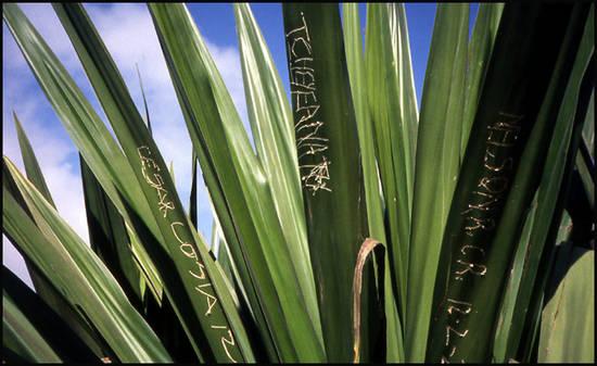 218cd cap vert agave tag.1277112155 Voyage Cap Vert   Premiers pas sur les chemins du Cap Vert
