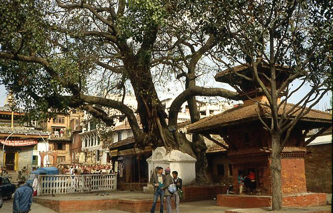 katmandou pipal crevant plafond du temple
