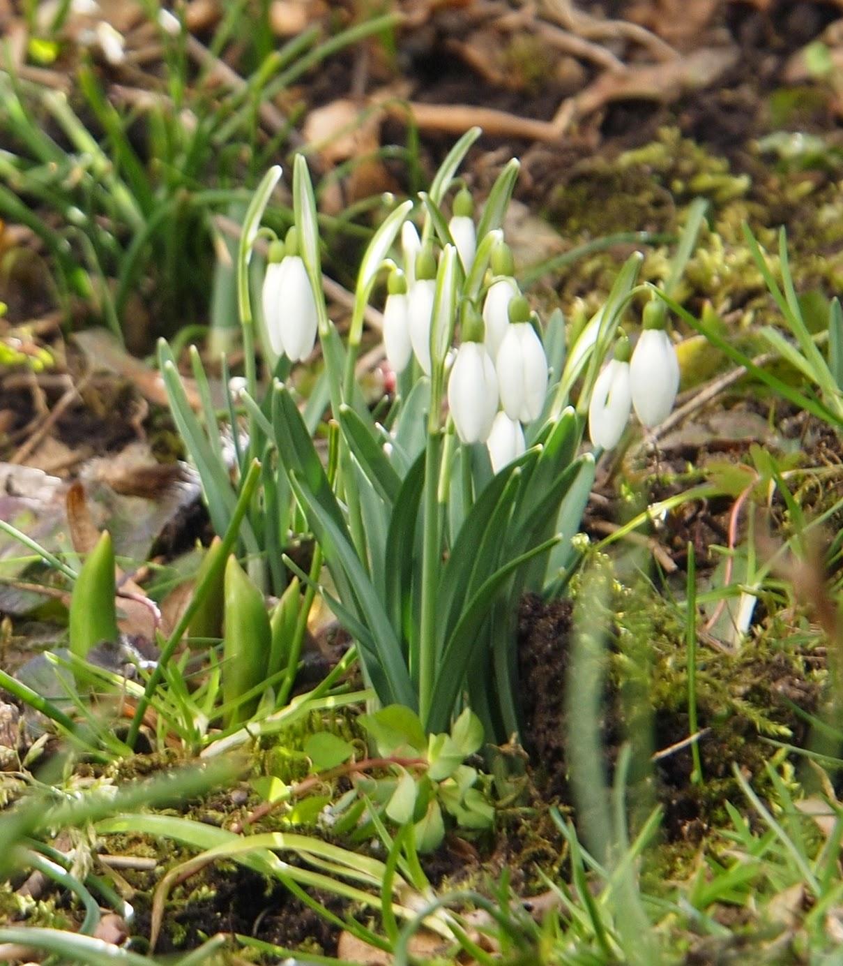 Fleurs des Alpes : Découvrir les arbres, plantes et fleurs de la flore alpine 13