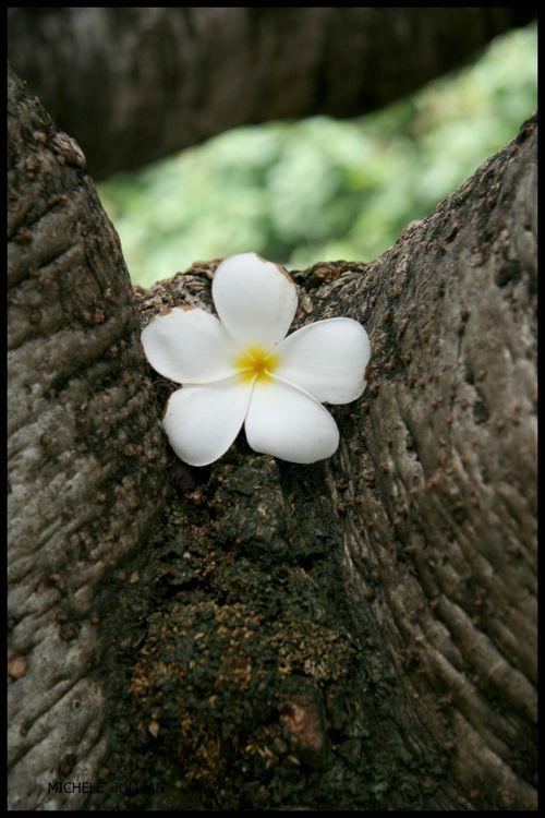 BLOG - fleur de temple-2