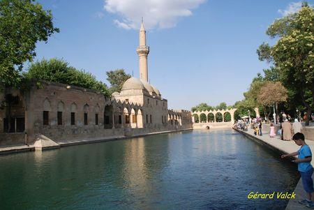 3 Bassin aux carpes sacrées à Urfa