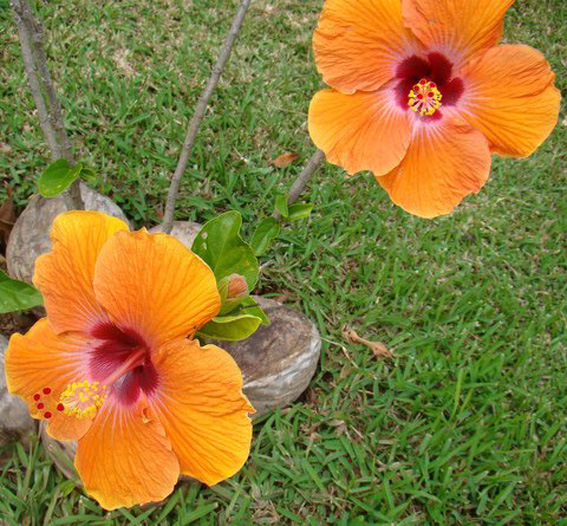 Tourisme en Polynesie Française : développer le tourisme autrement 1