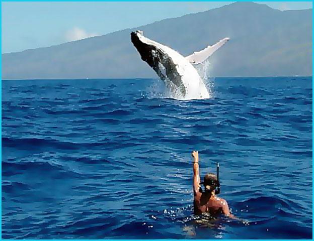 Tourisme en Polynesie Française : développer le tourisme autrement 2