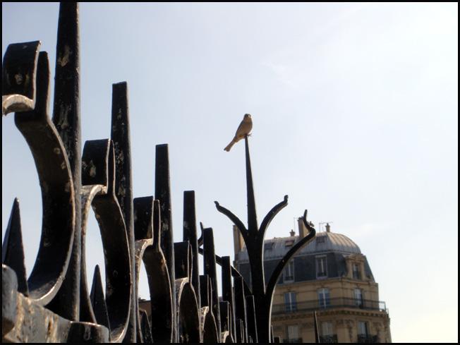 paris-piaf.1274374464.jpg