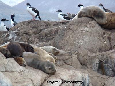 Ushuaia : Navigation par le canal de Beagle 3