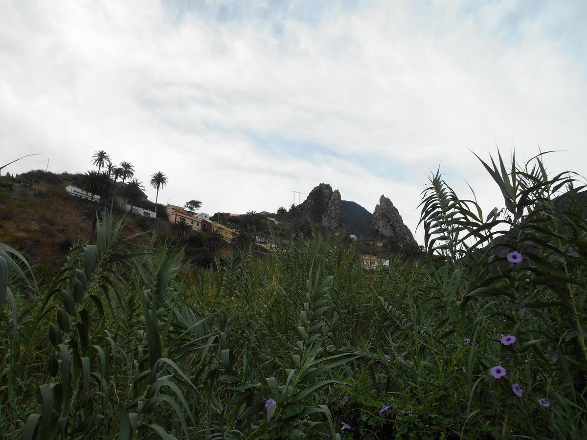 """petite halte au """"Molino de Gofio"""" qui est un lieu d'expositon de nombreuses plantes et arbres."""