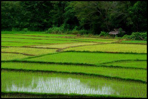 Blog sur la route de Huay Phaa
