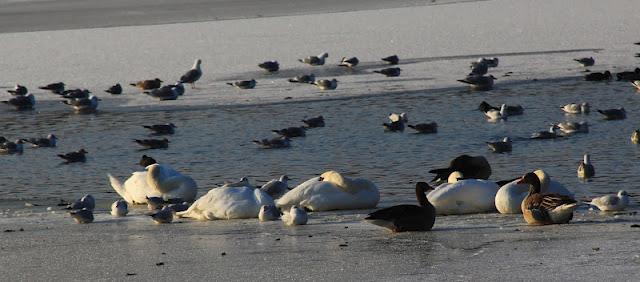 lac copenhague danemark hiver