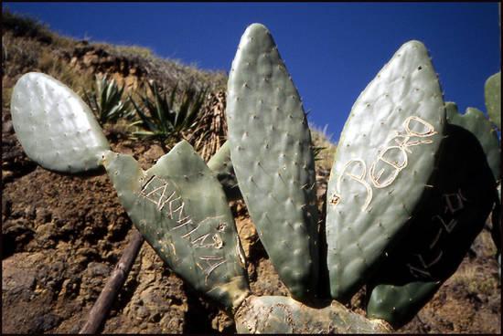 cap-vert-cactus-graves.1277114002.jpg