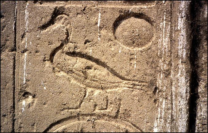 canard hieroglyphe