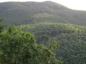 Photos Chine - Au coeur d'une forêt de bambous de Chine 3