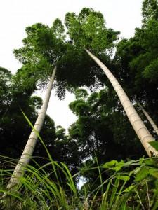 Photos Chine - Au coeur d'une forêt de bambous de Chine 2