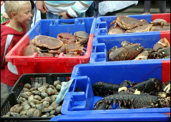 crabes-et-homards-de-saint-pol-de-leon.1280579378.jpg