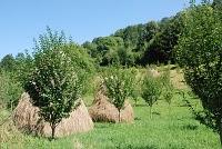 Voyage Bulgarie ; de Veliko Tarnovo à Koprishtitsa 10