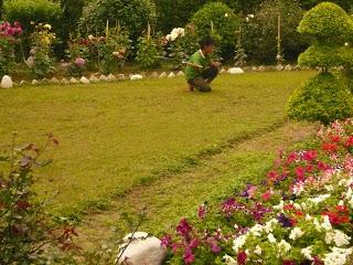 jardinier indien assam