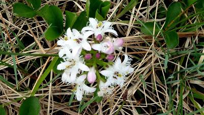 Fleurs des Alpes : Découvrir les arbres, plantes et fleurs de la flore alpine 25