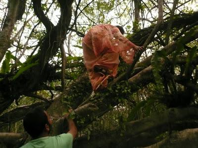 Parc national de Dibaru Saikhowa: week end nature en Inde 2
