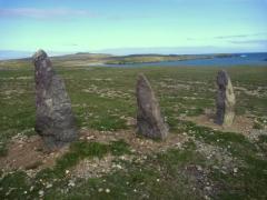 papa stour,shetland,skua arctique,ecosse,chiens