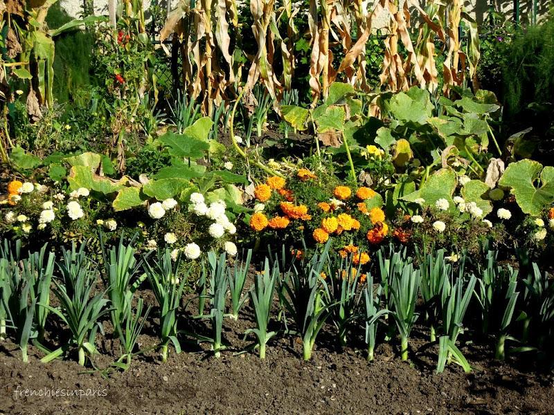 Jardins de Paris - Jardin Catherine Labouré ; un sympathique potager (Paris 7) 1