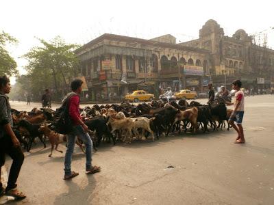 Visiter Calcutta ; une ville étrange pour découvrir l'Inde insolite 21