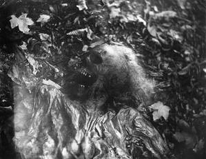 98468 1441press112.1280568975 Londres Exposition photos de Sally Mann : La perte de l'innocence