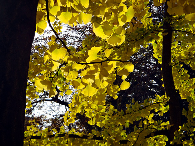 feuilles paris luxembourg automne
