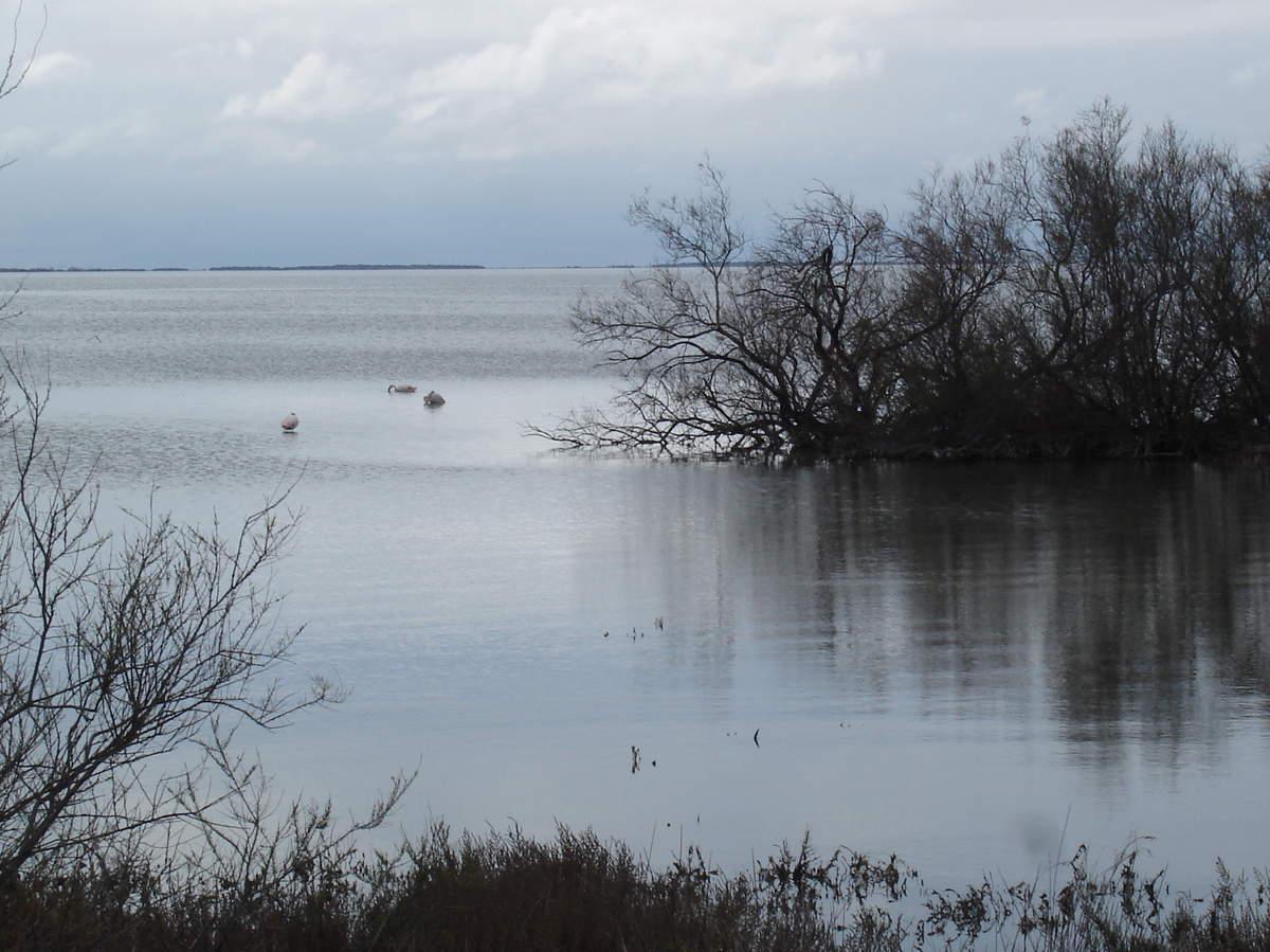 La Camargue ; du parc naturel régional aux Saintes Maries de le Mer 10