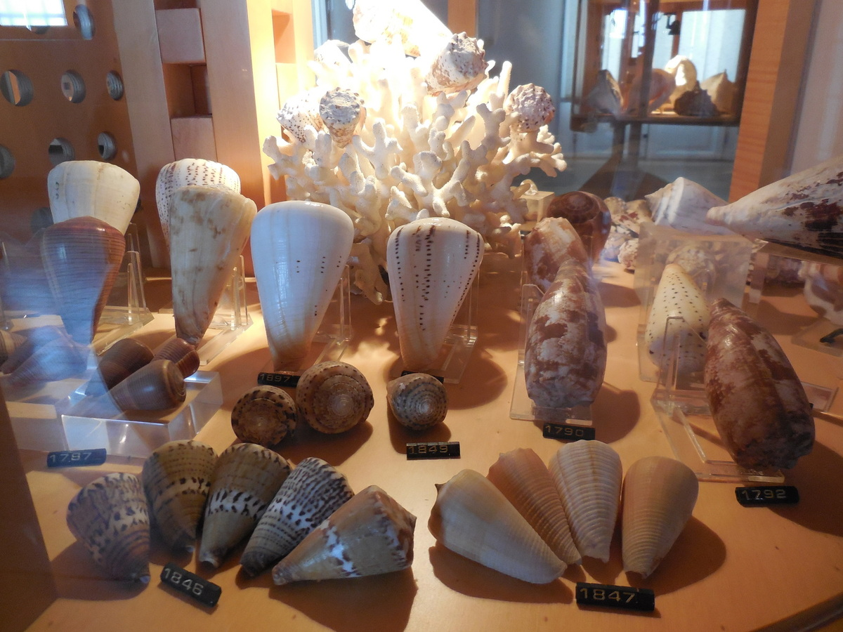 Venise: le Musée d'Histoire navale