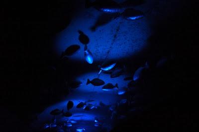 La Fête des Lumières de Lyon (8 décembre) : un événement incontournable 17