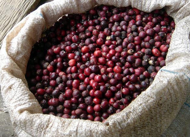 cafe-en-grains-crus.1269254866.JPG