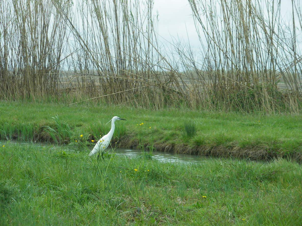 La Camargue ; du parc naturel régional aux Saintes Maries de le Mer 11