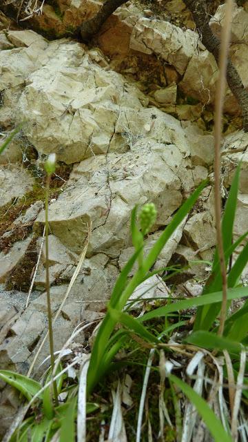 Fleurs des Alpes : Découvrir les arbres, plantes et fleurs de la flore alpine 18