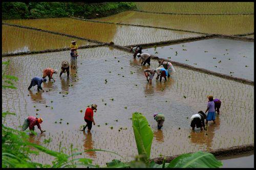 Blog 1 -sur la route de Huay Phaa