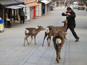 Voyage Japon : le Kansai, une région magnifique 12