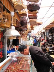 Marché de Shanghai : de Xizang à Dongtai Lu à la recherche de la petite bête 5