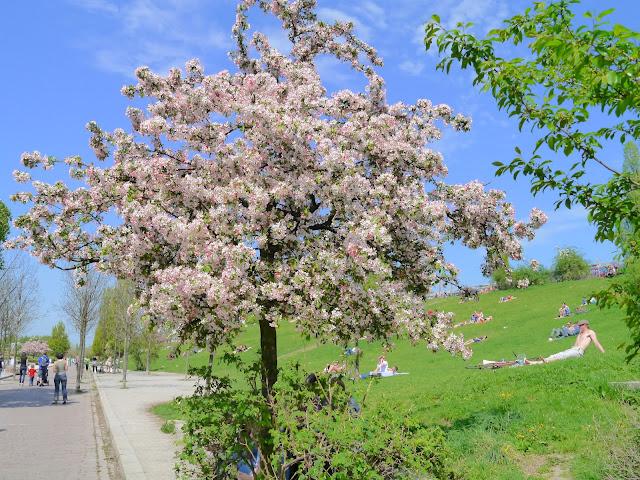 Vivre à Berlin ; les aléas d'avril 12