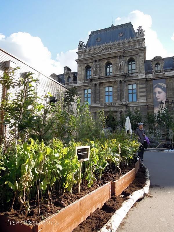 Une foret au coeur de Paris au Palais Royal (23 Septembre 2012) 1
