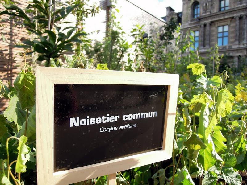 Une foret au coeur de Paris au Palais Royal (23 Septembre 2012) 4