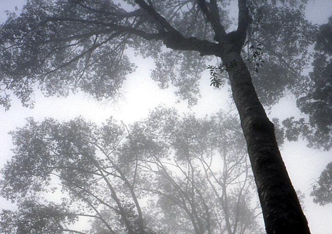 nepal arbres