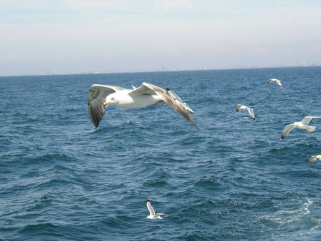 mouettes istanbul