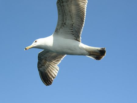istanbul mouette
