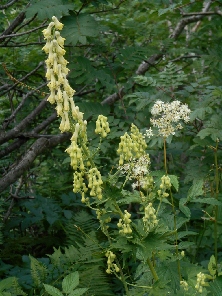 Et toujours de nombreuses fleurs en cette saison très humide.