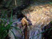 Plitvice Parc national Croatie : lacs de Plitvicka Jezera, une nature magnifique 12